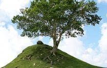 樹木葬とは?費用やメリット・注意したいトラブルについて