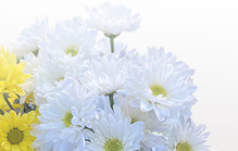 供花は「きょうか」?「くげ」?正しい読み方から贈り方のマナーまで徹底解説!