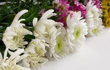 家族葬での献花のマナー!迷惑をかけない届け方や会社側の対応は?