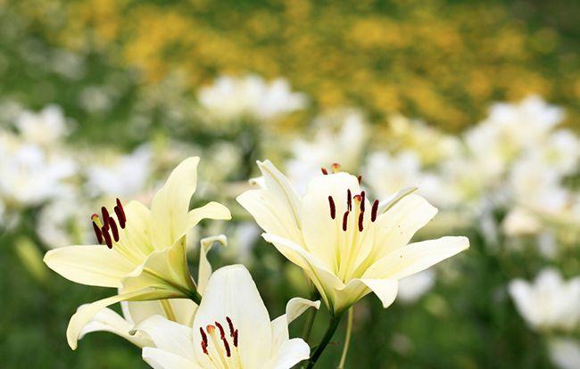 花祭壇の種類や価格について