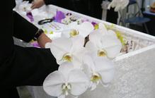 火葬式(直葬)でのお花のマナーを紹介!花入れできる花の種類とは?